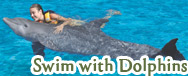 Swim with dolphins programs
