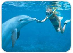 Dolphin Swim Adventure Cruise ativities